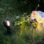 Focos LED de Fuentes y Jardines